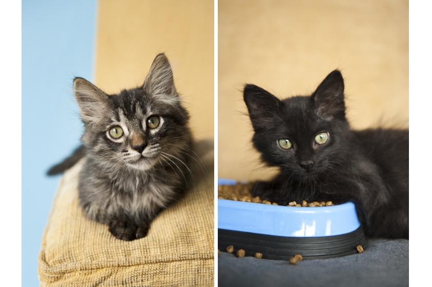 Cat Photography-6.jpg