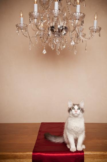 Cat Photography-9.jpg