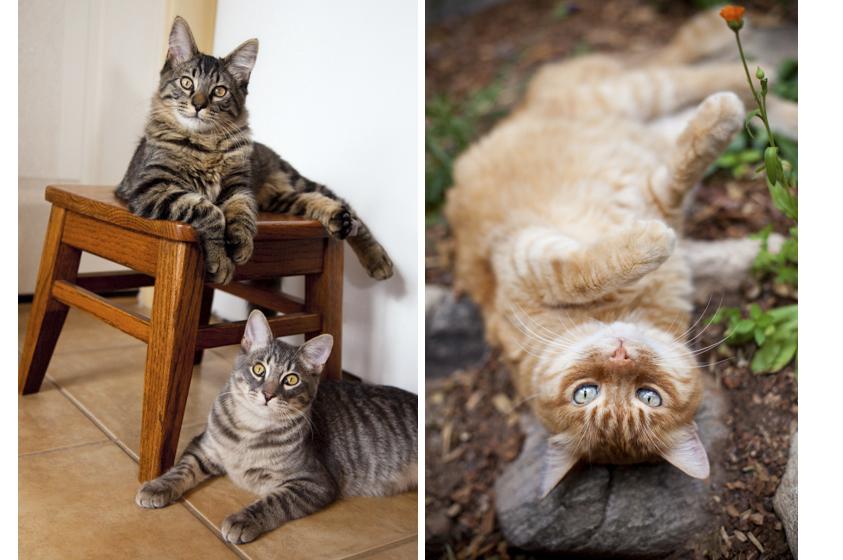 Cat Photography-8.jpg