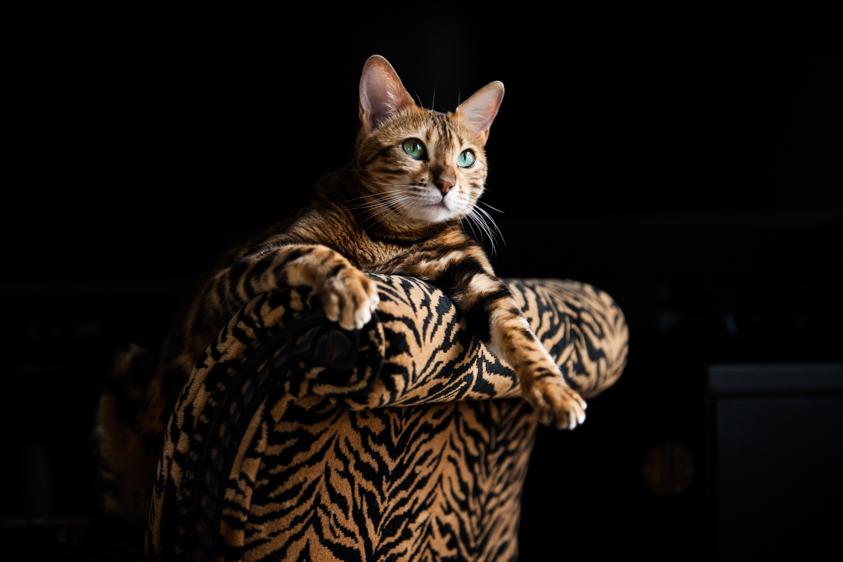 Cat Photography-16.jpg
