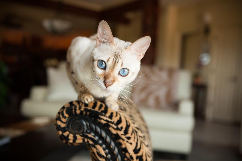 Cat Photography-17.jpg