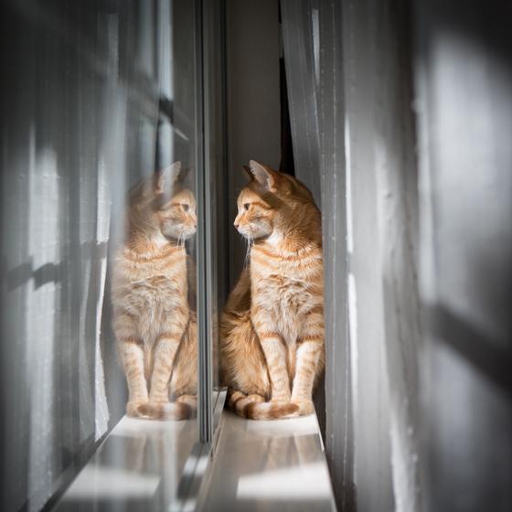 Cat Photography-18.jpg
