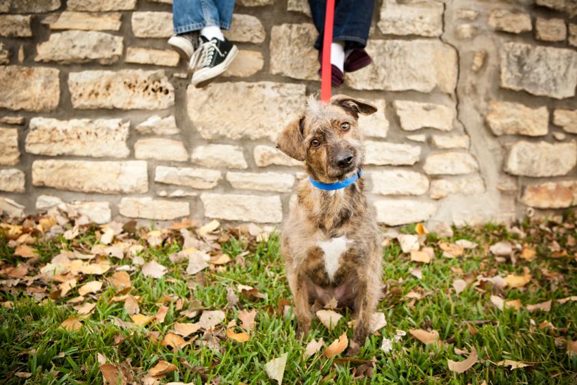 Dog Portraits-2.jpg