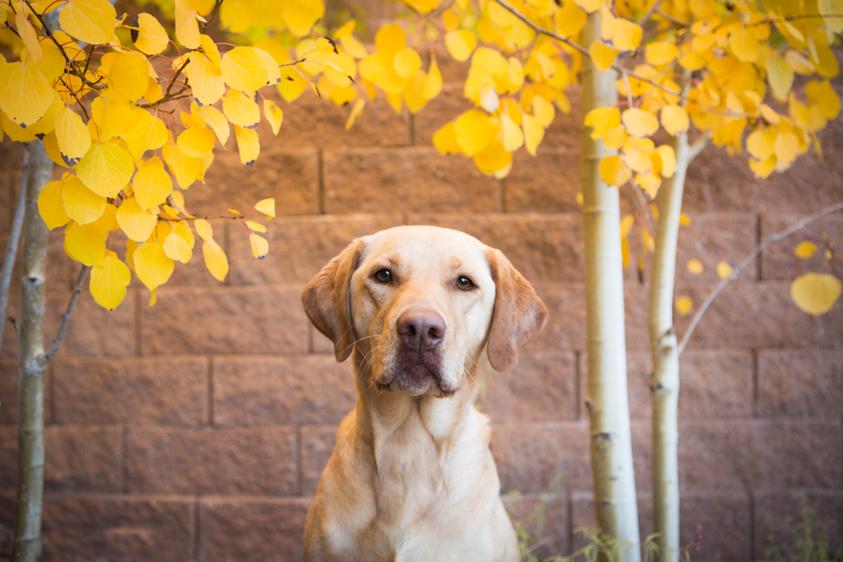 Dog Portraits-6.jpg