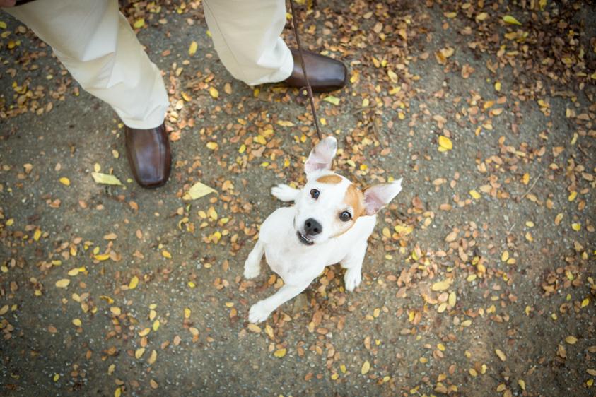 Dog Portraits-9.jpg