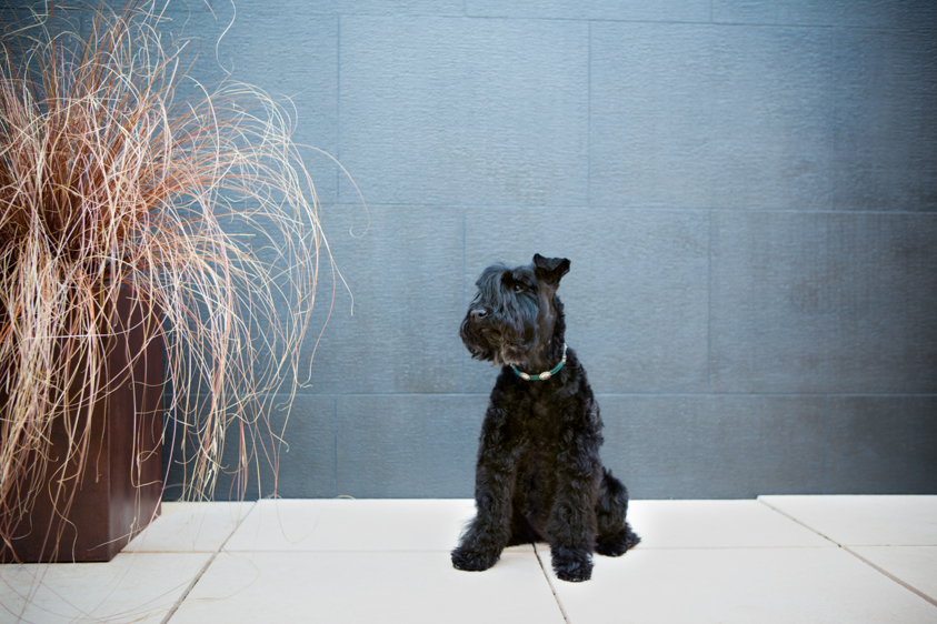 Dog Portraits-10.jpg