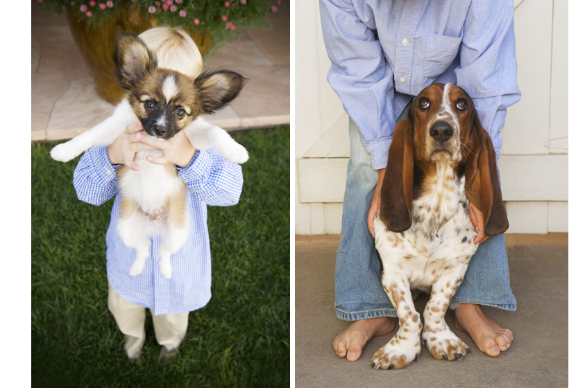 Dog Portraits-13.jpg