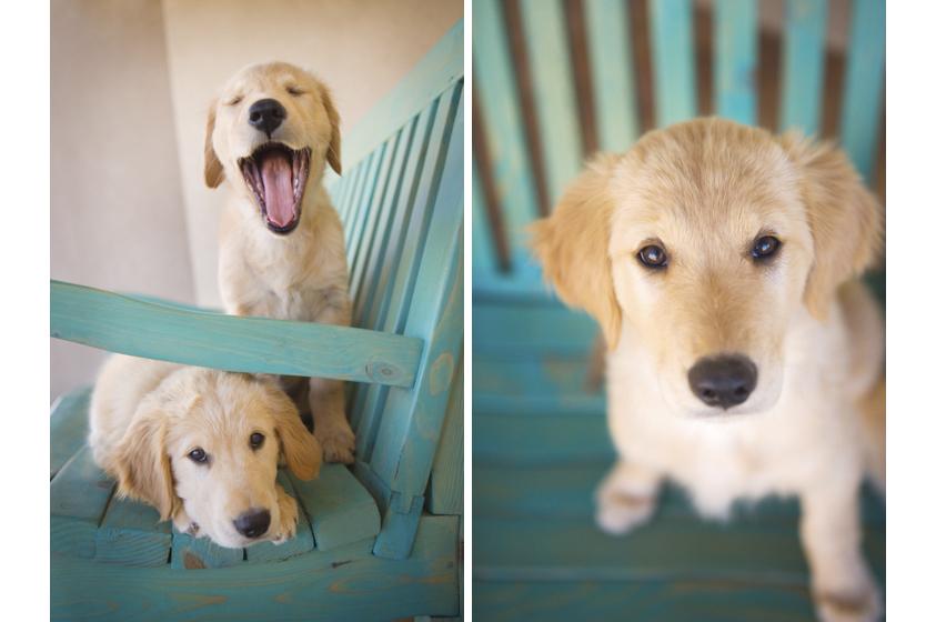 Dog Portraits-14.jpg
