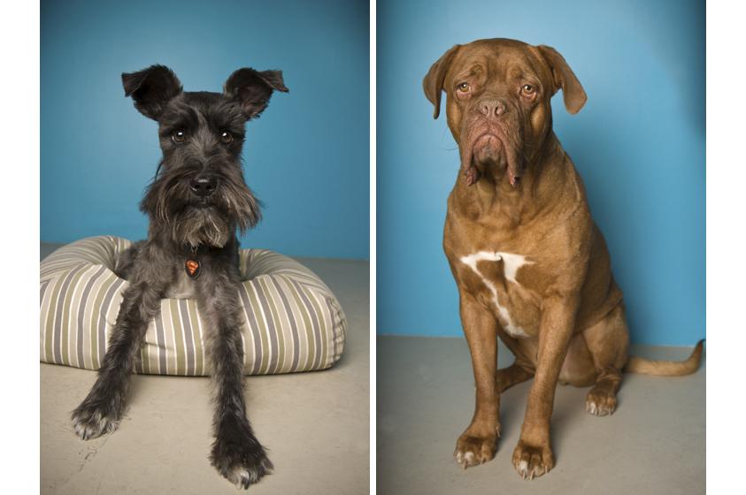 Dog Portraits-18.jpg