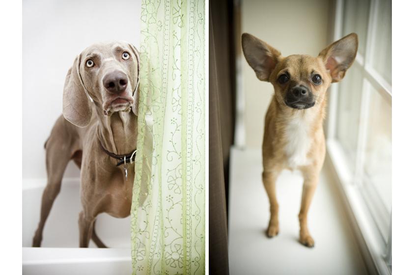 Dog Portraits-16.jpg