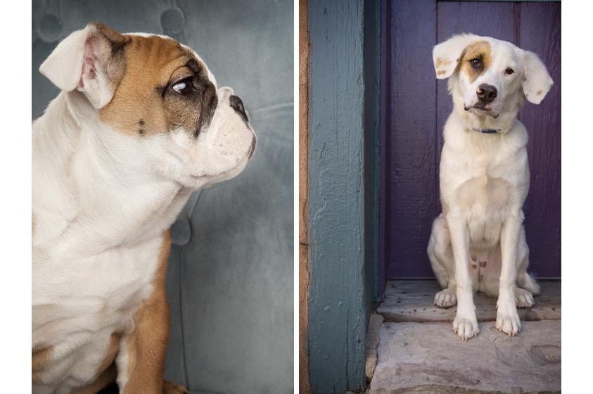 Dog Portraits-22.jpg