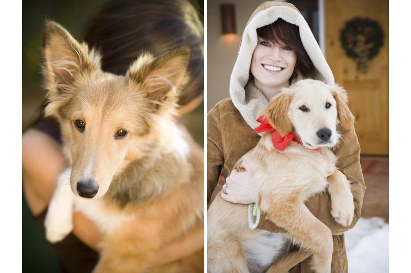 Dog Portraits-24.jpg