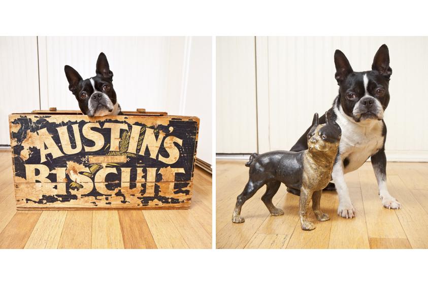 Dog Portraits-33.jpg