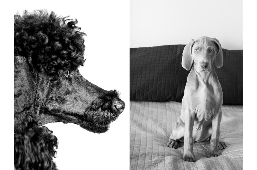 Dog Portraits-35.jpg