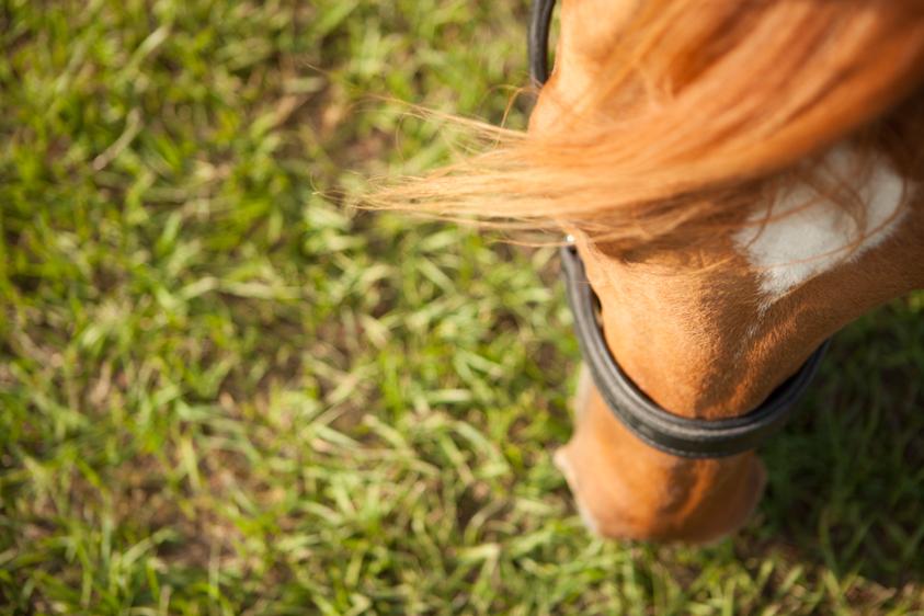 Horse Portraits-9.jpg