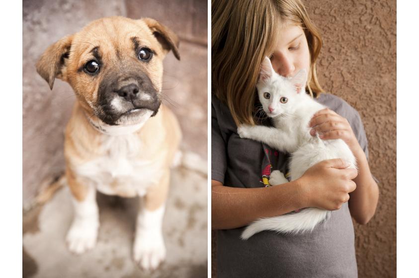 Animal Welfare Photography-1.jpg