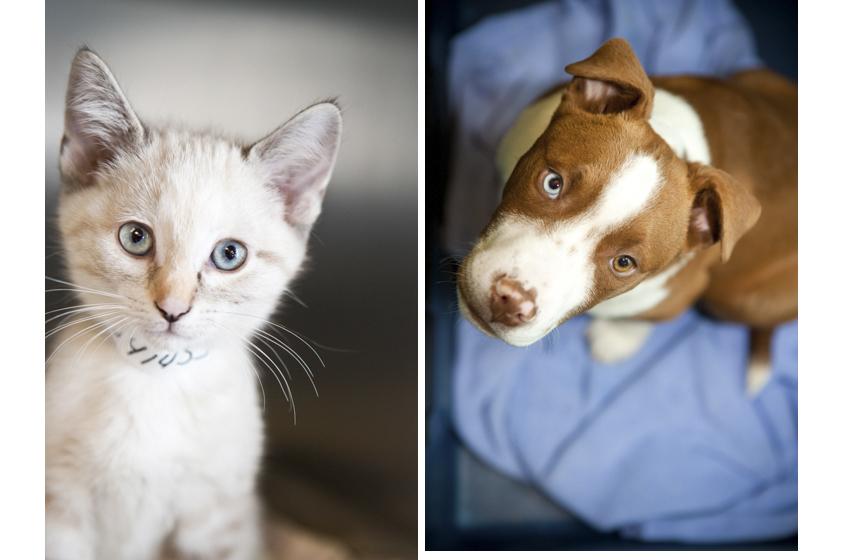Animal Welfare Photography-8.jpg