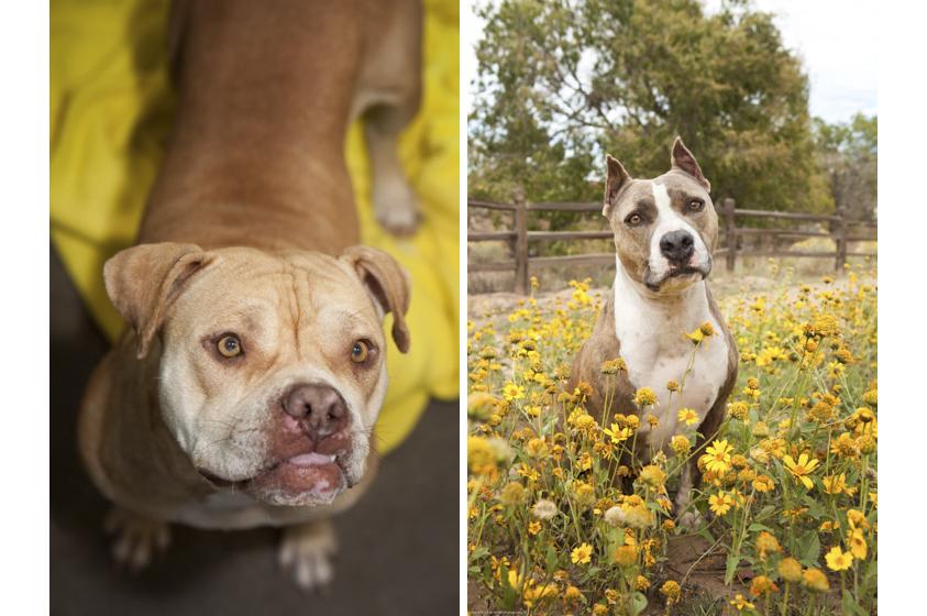 Animal Welfare Photography-14.jpg