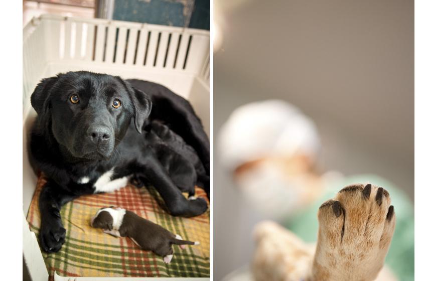 Animal Welfare Photography-15.jpg