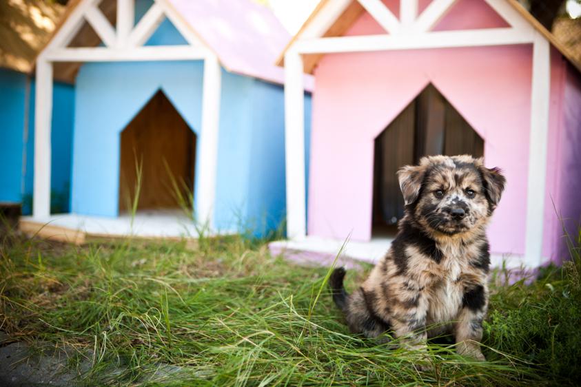 Animal Welfare Photography-19.jpg