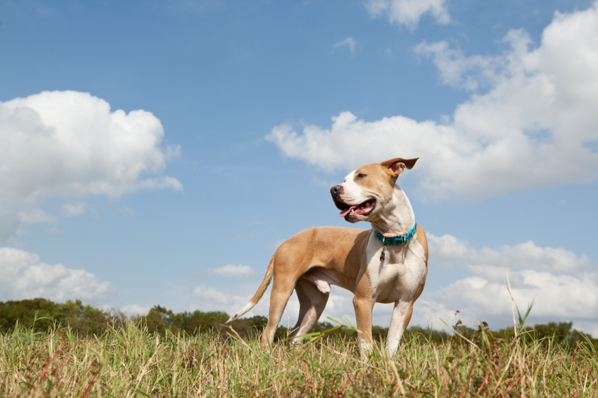 Animal Welfare Photography-22.jpg