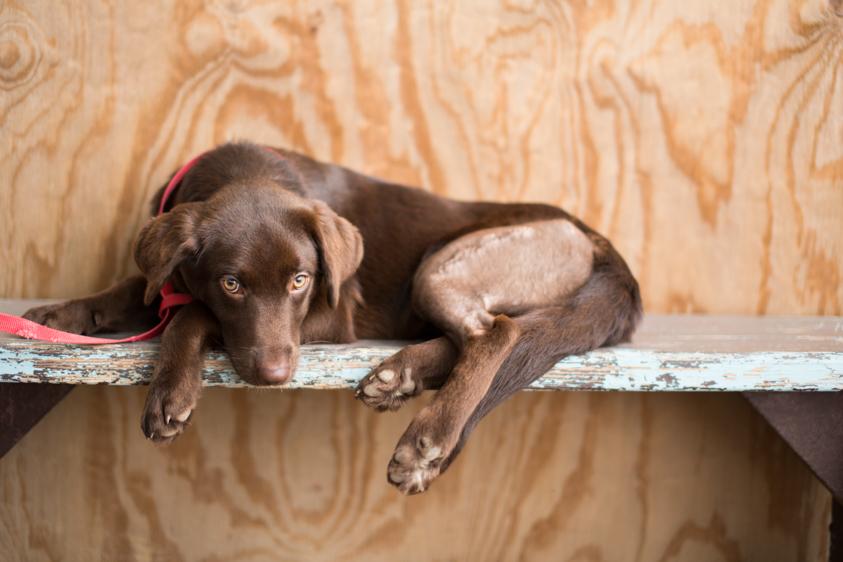 Animal Welfare Photography-24.jpg