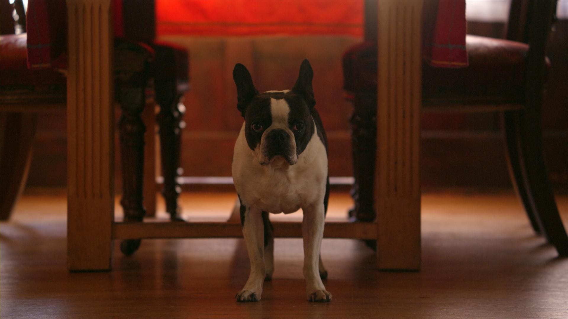 Zen Louie.jpg