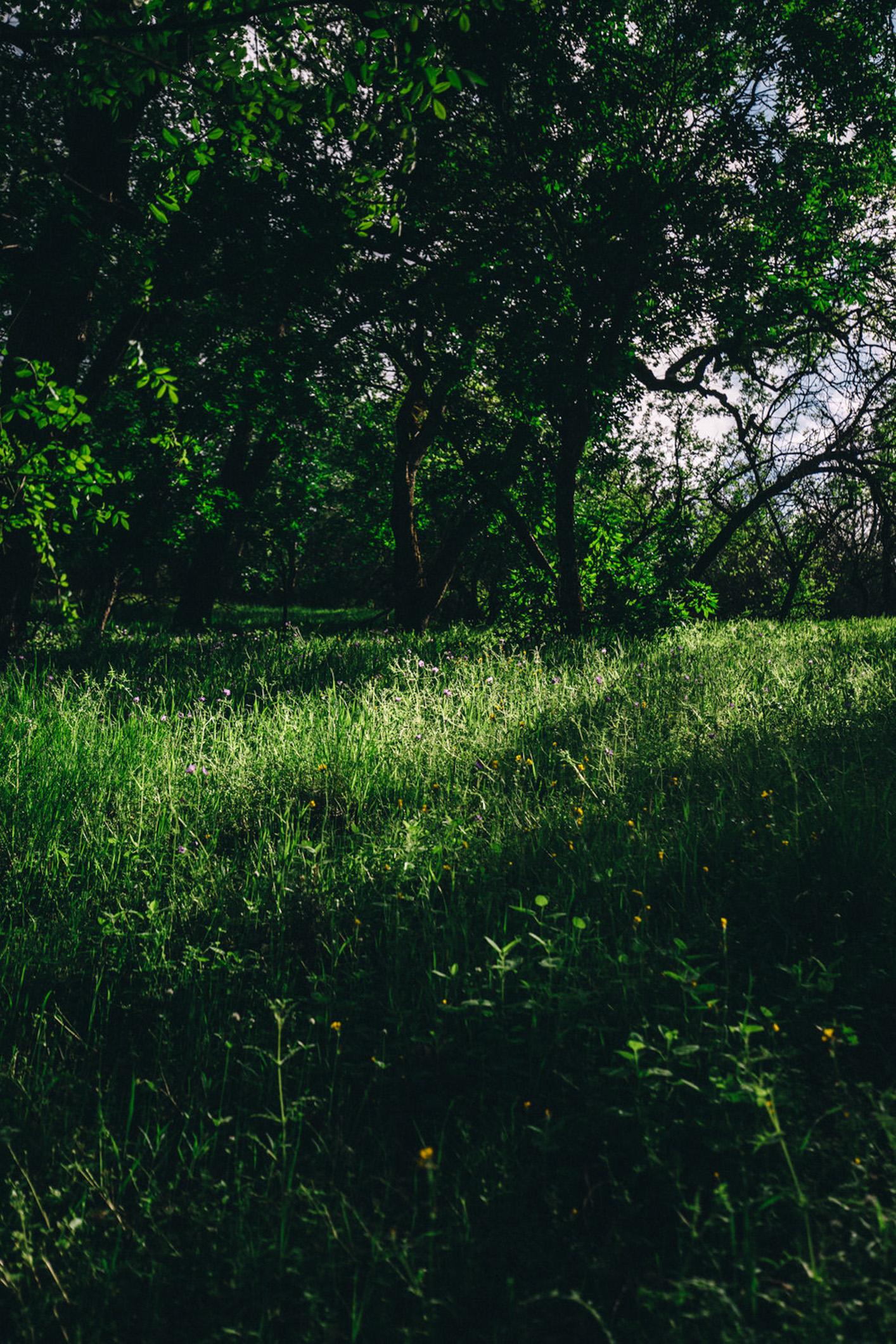 nature-55.jpg