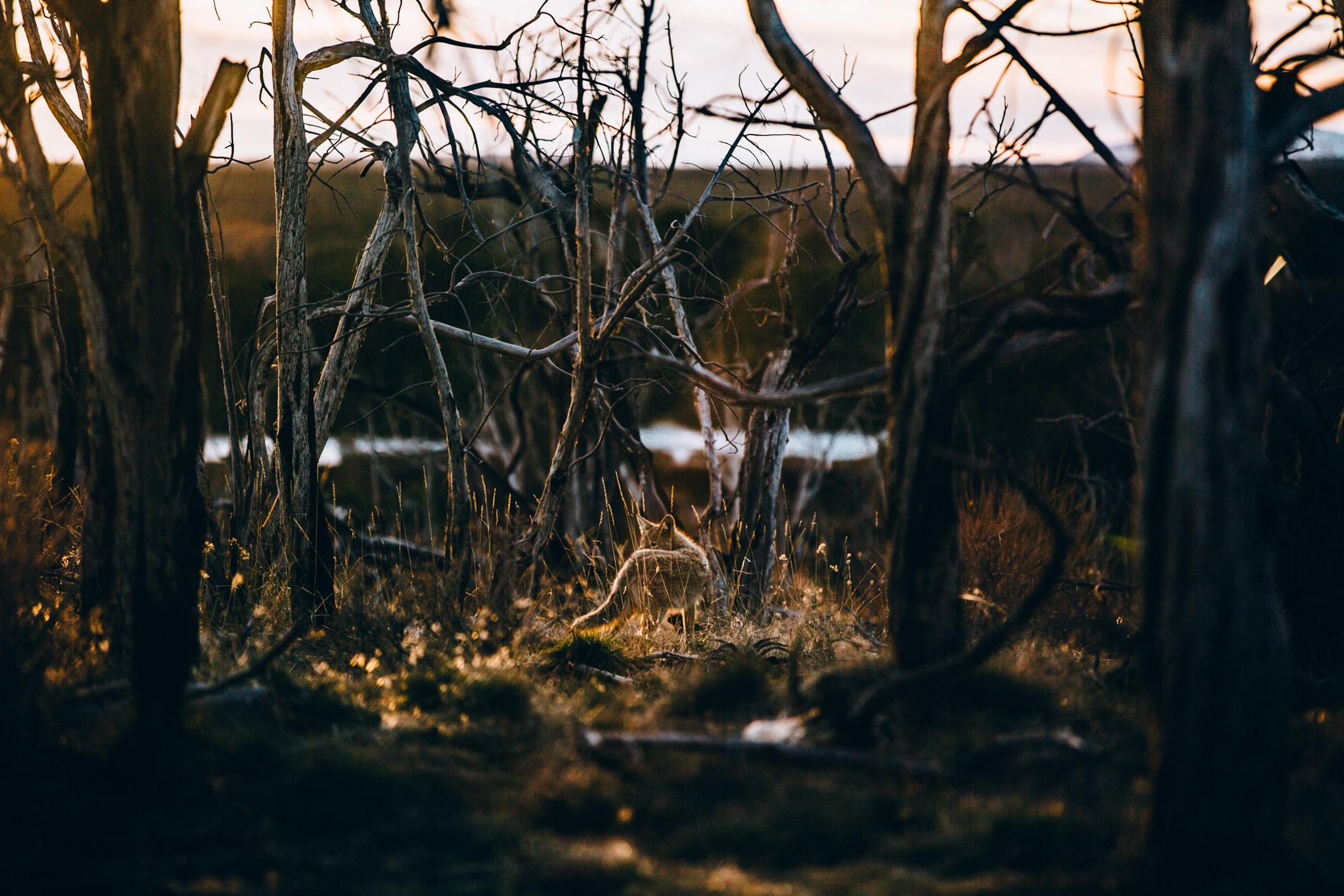 nature-16.jpg