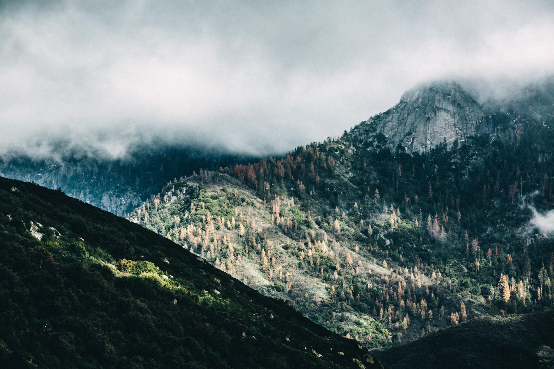 nature-56.jpg
