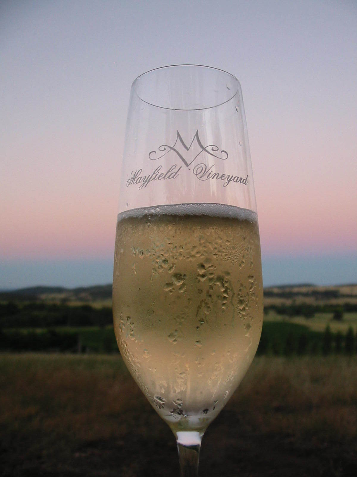 Champagne Flute.JPG