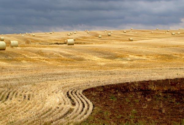 Alberta-field.jpg