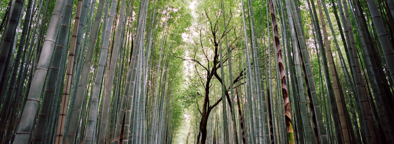 hasselblad-xpan-japan-jason-de-plater-26.jpg