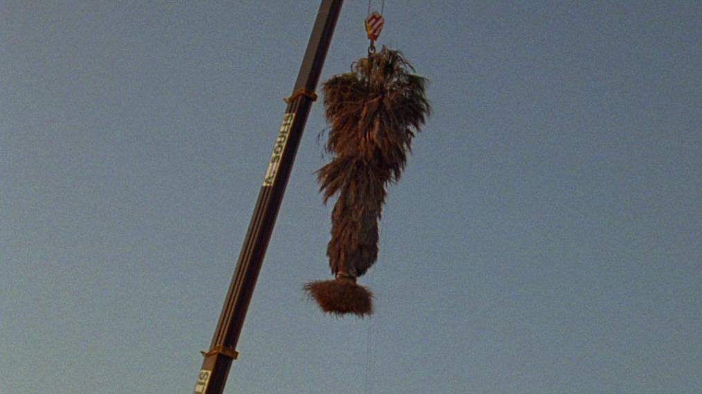 "Cyprien Gaillard, ""Palms won't grow here"""