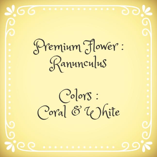 ranunculus coral & white