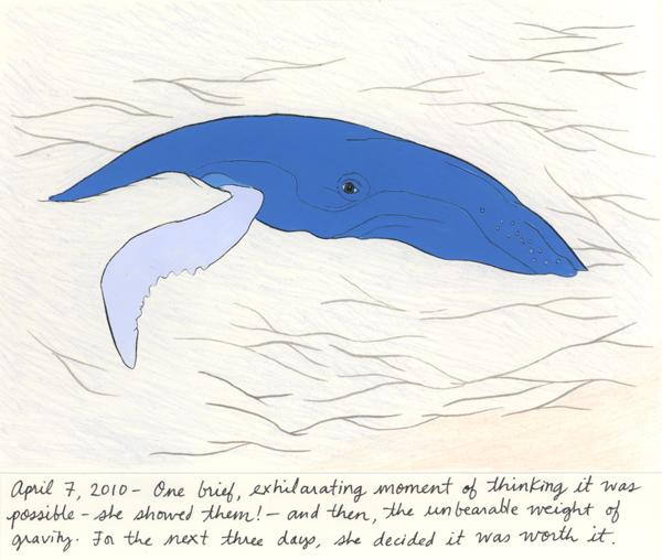 porter_humpbackwhale.jpg