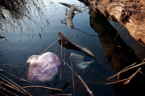 A bag of lottery tickets submerged in Prospect Park Pond.