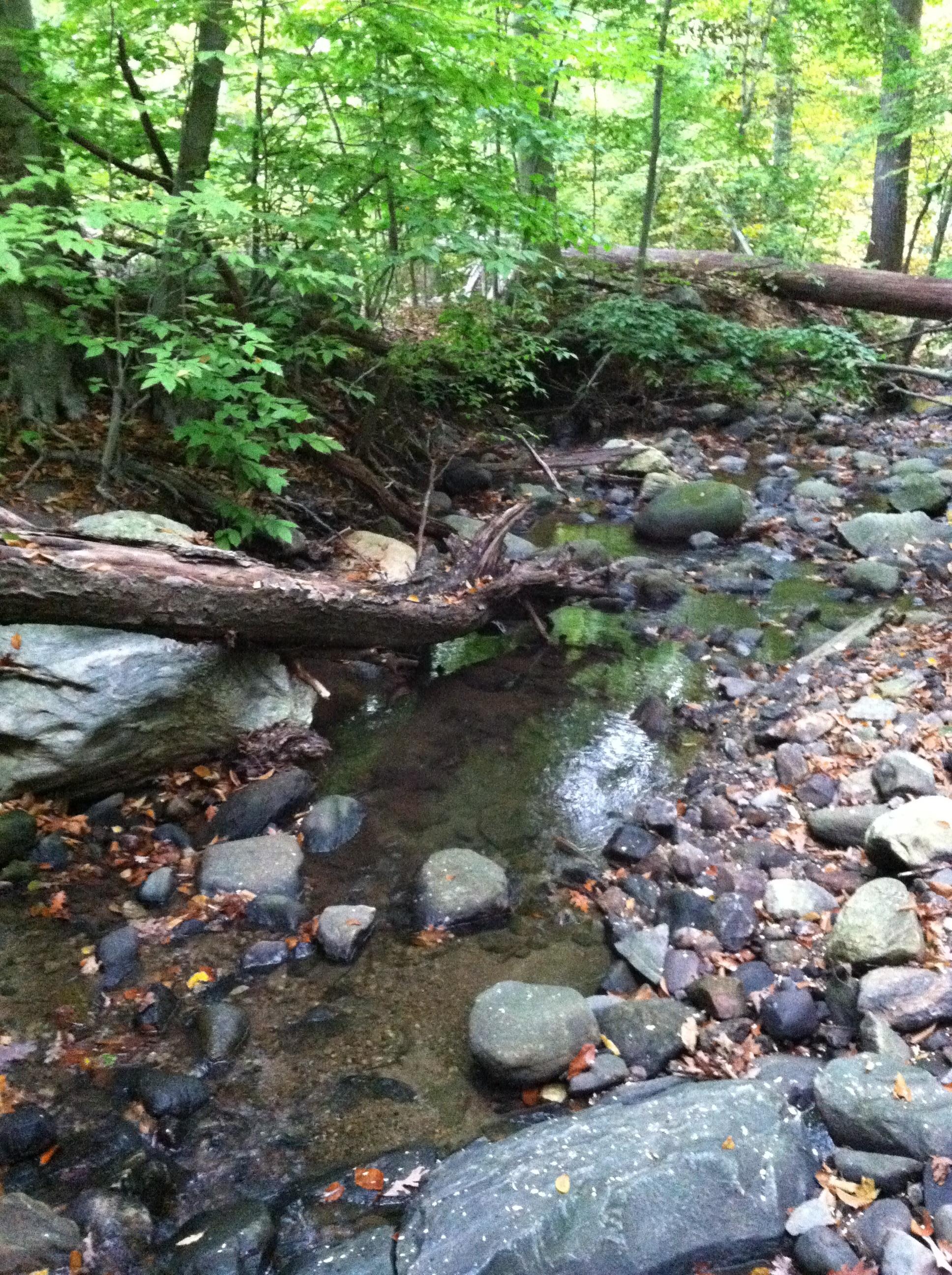 Autumn on Rum Brook