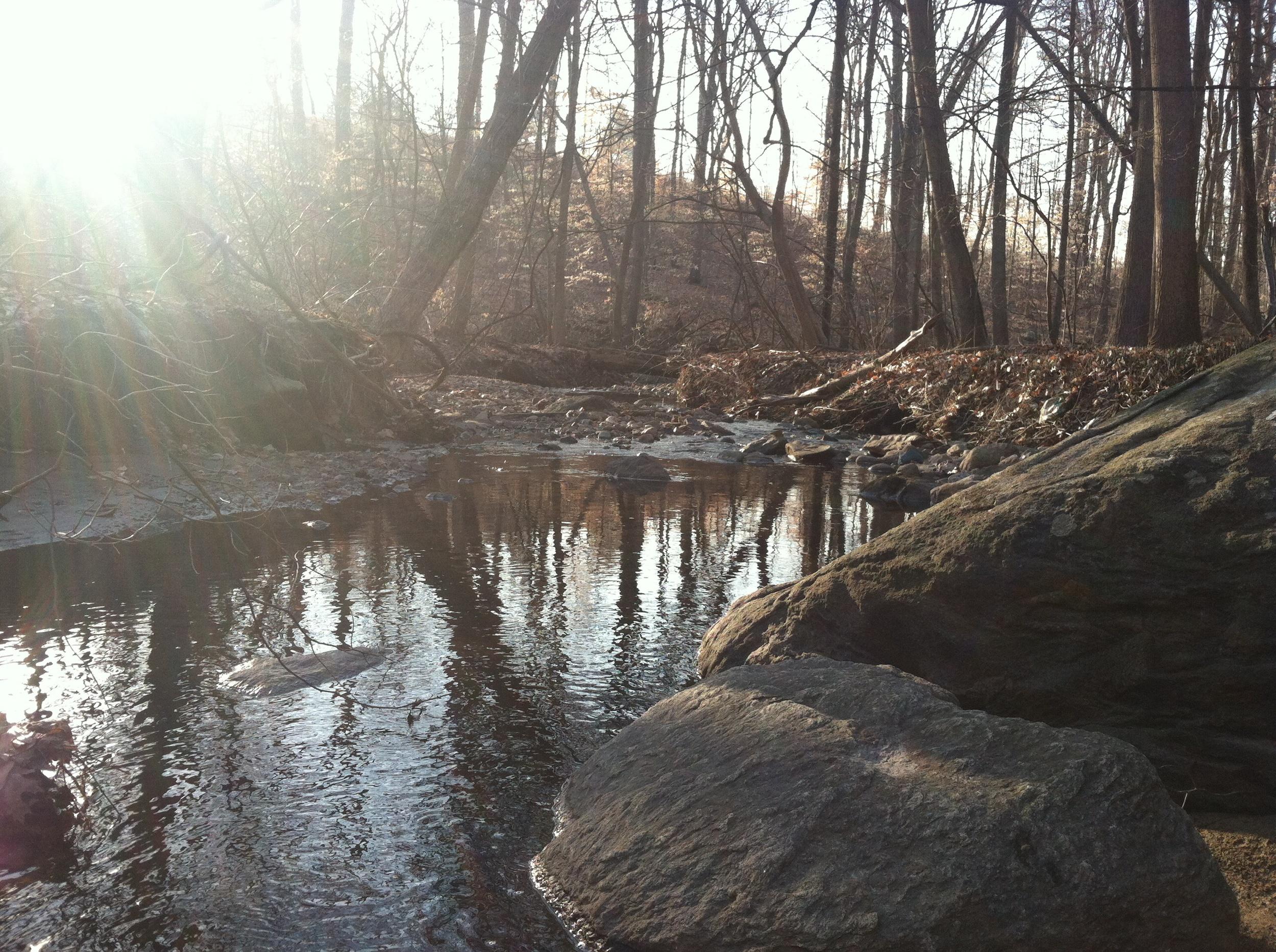 Spring on Rum Brook