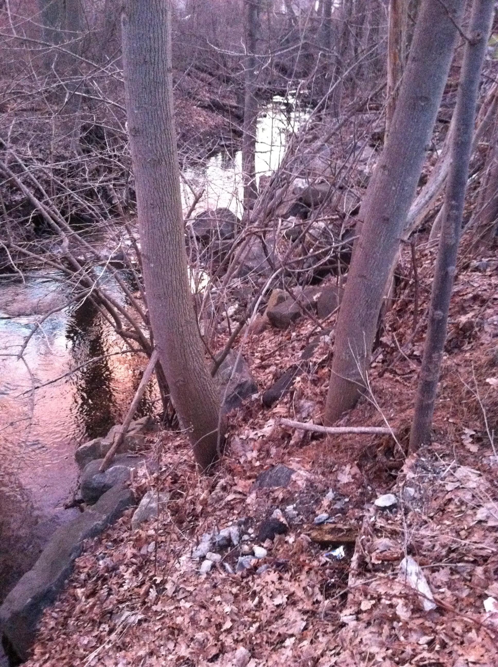 Spring on Sheldon Brook