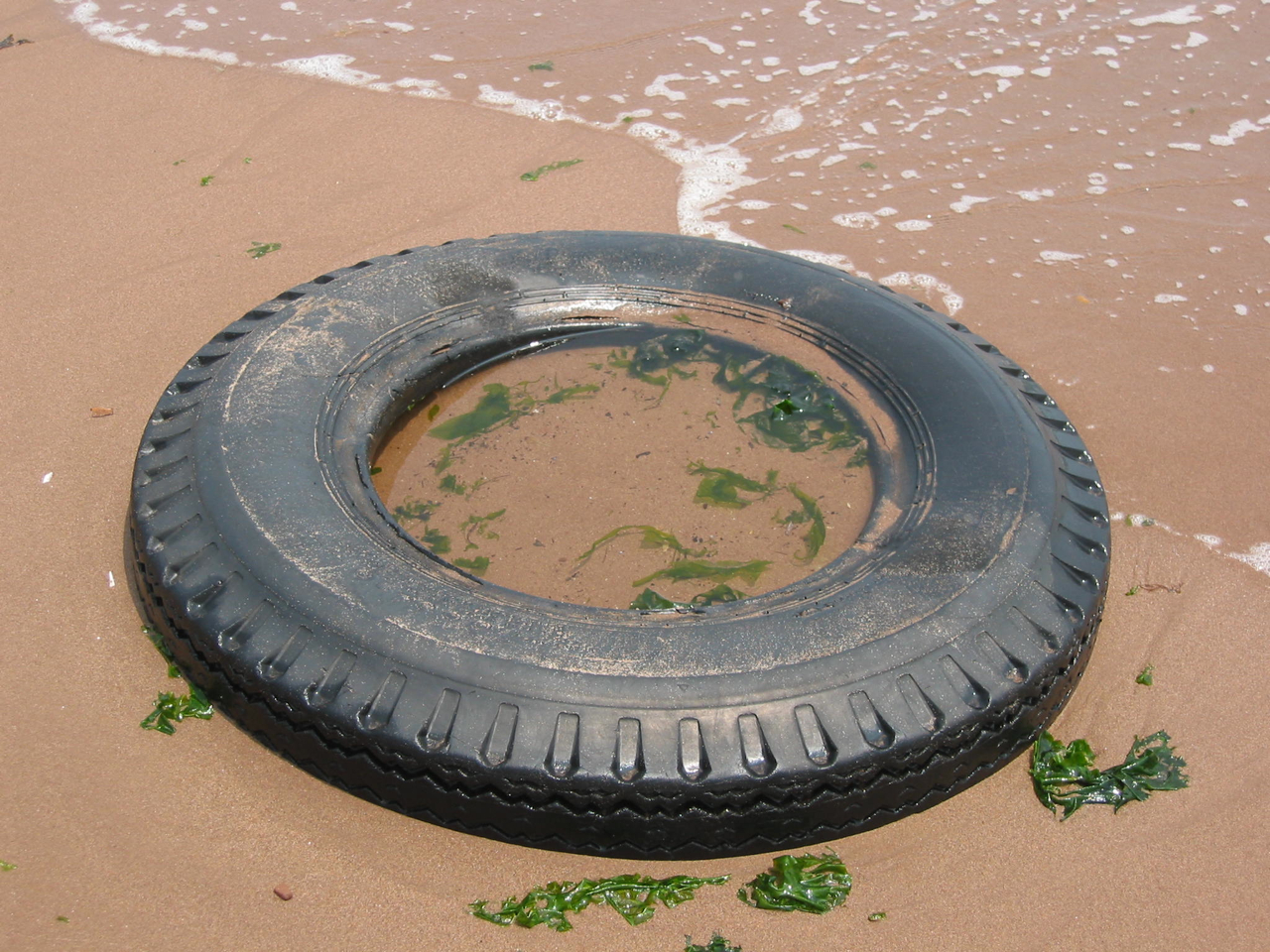 Tire, 11:54am, July 4, 2004. Oakwood Beach, Staten Island.