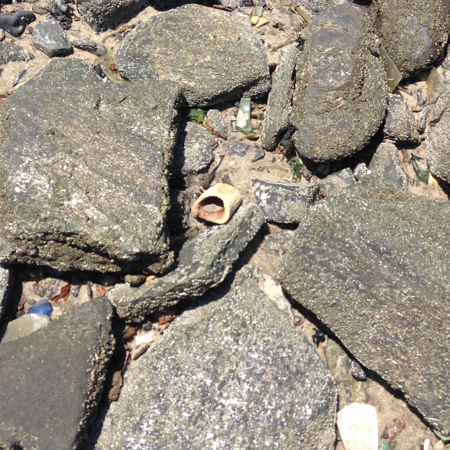 A horse bone in the rocks