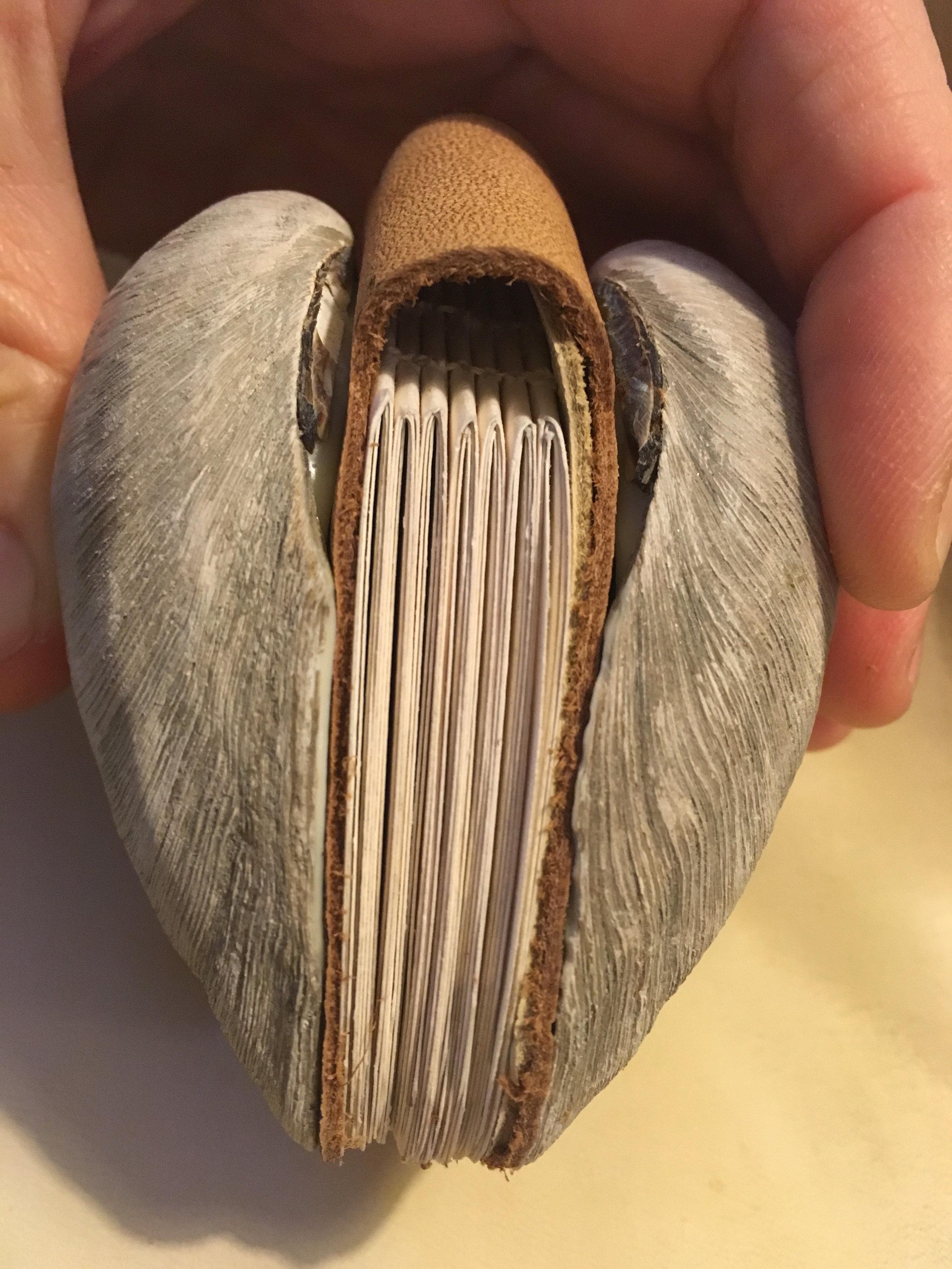 clambook.JPG