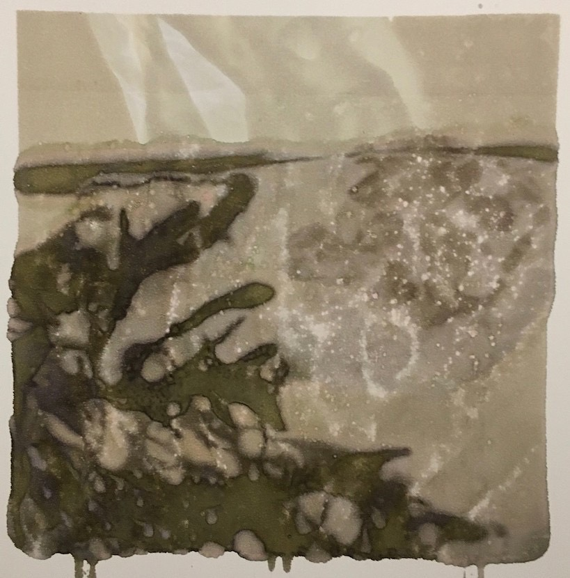 Photographic Monoprint. Bladder wrack and plastic bag.
