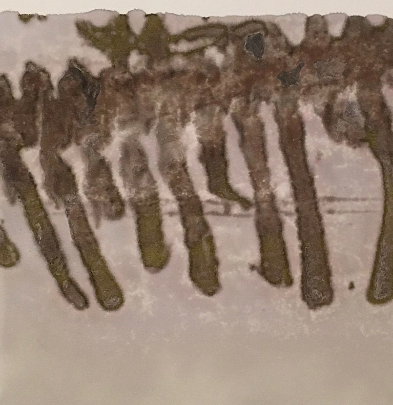 Photographic Monoprint. Skeletal remains.