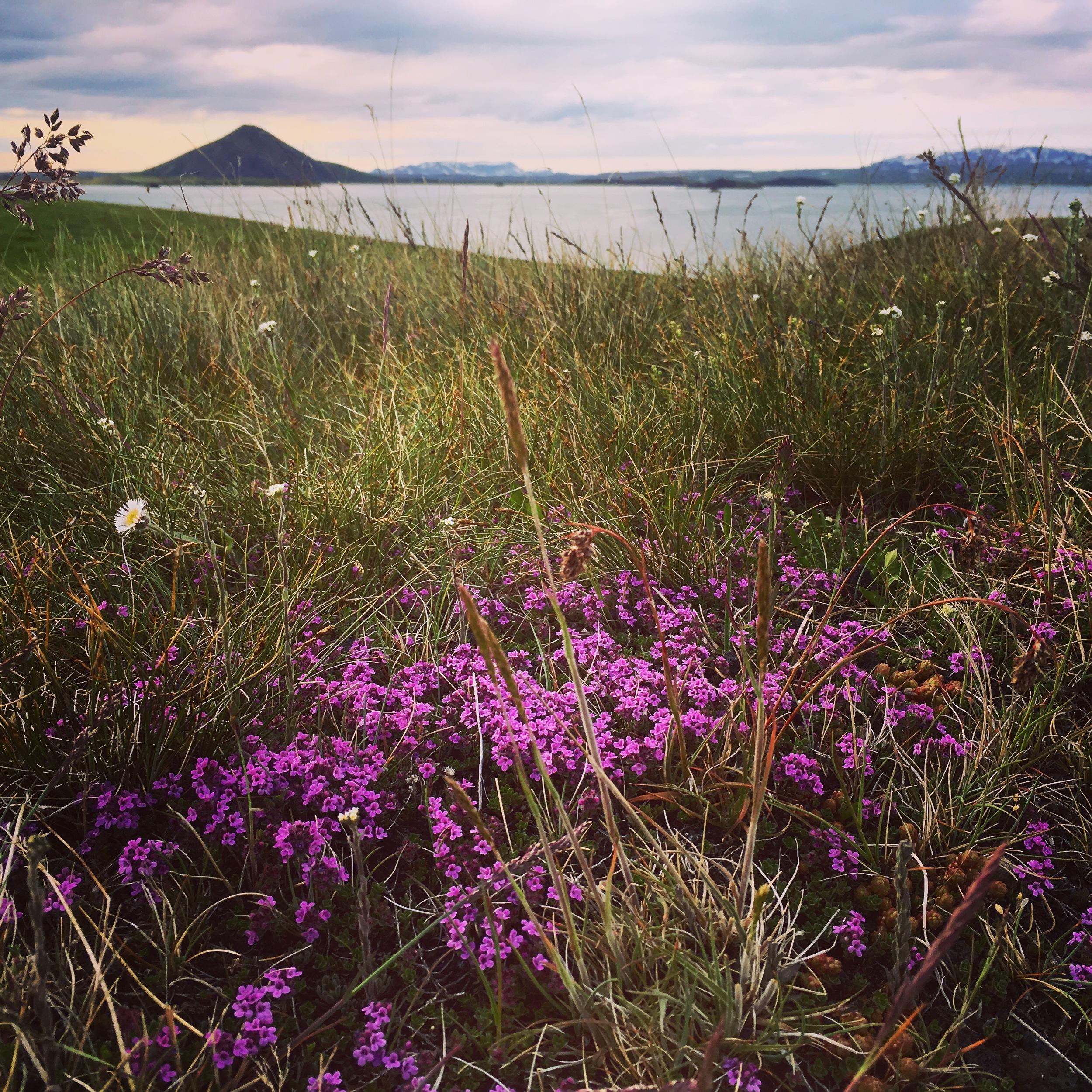 Iceland Landscape by Boston Photographer Erica Derrickson