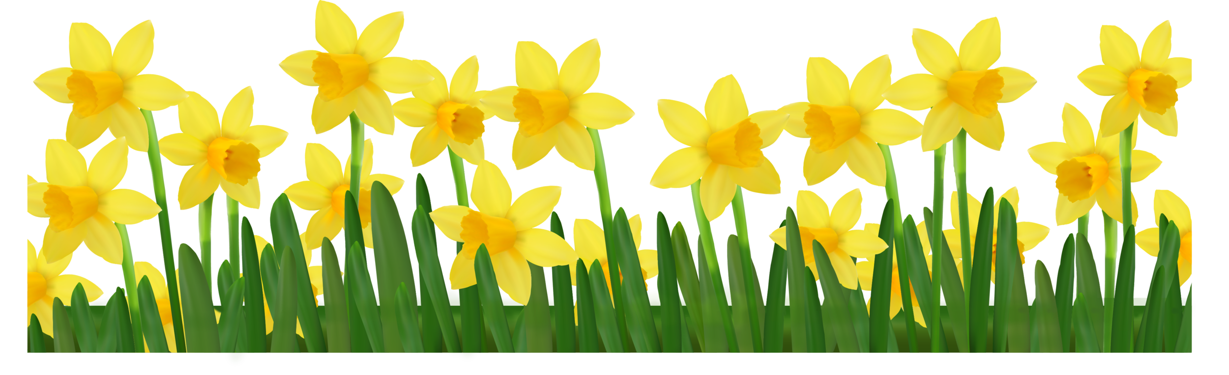 Grass_with_Daffodils_PNG.png