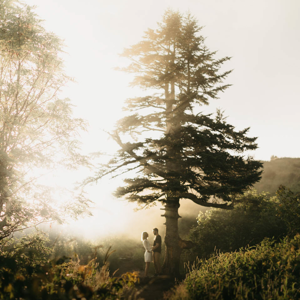 Couple under a foggy tree at sunset on Black Balsam Knob.