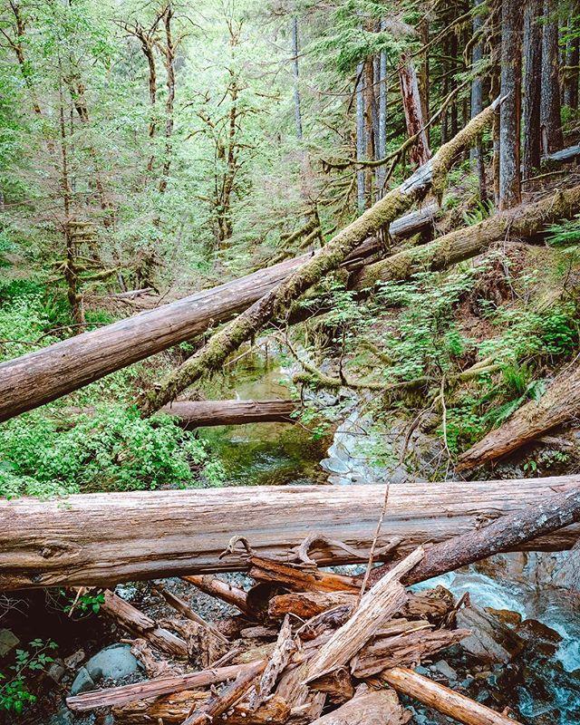 Siouxon Creek trail, Amboy, Washington. #getoutside #pnwhiking #fujifilmgfx50s #fujifilm #fujilove