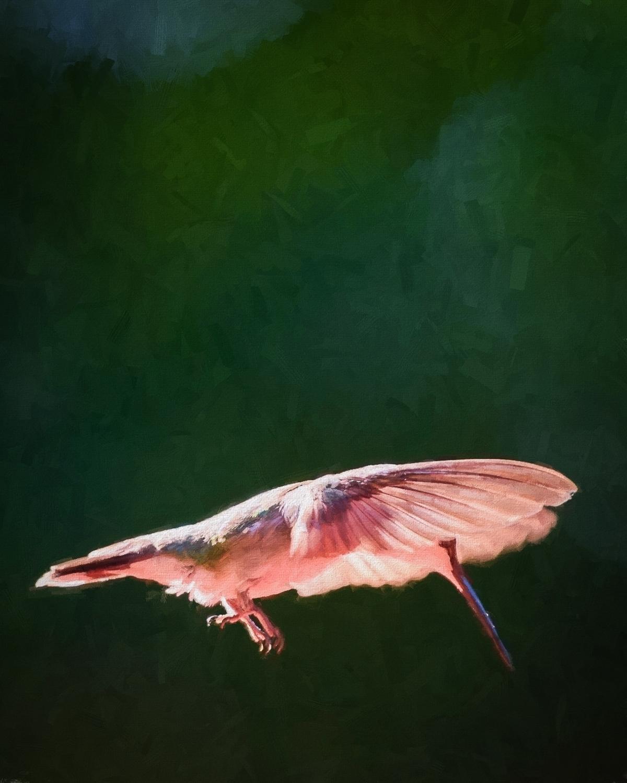 2015-06-24_Hummingbirds_Booker_0108-Edit.jpg